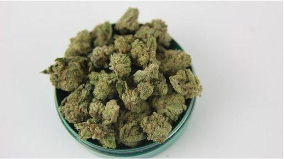 Canada Marijuana Marketplace