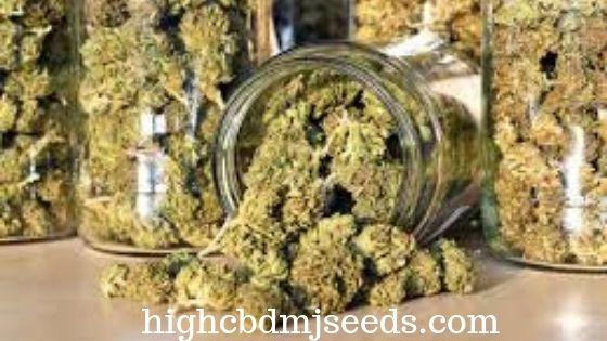 Find Online Cannabis Store