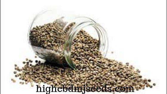 Big Seed Companies