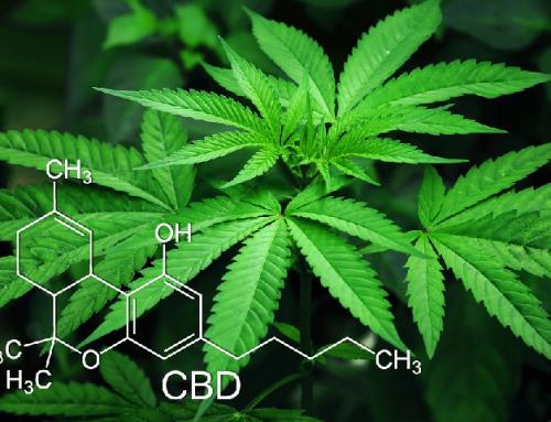 CBD Marijuana Seeds – Know the Quality of the Seeds