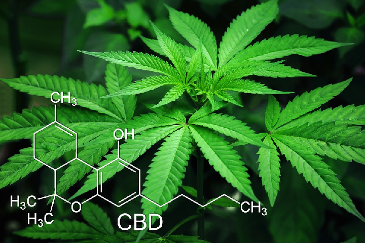 cbd marijuana seeds