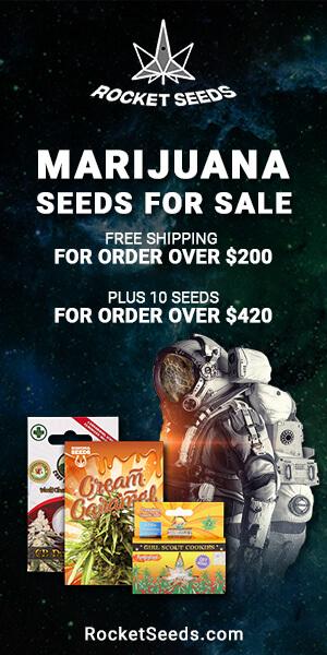 Rocket Seeds banner
